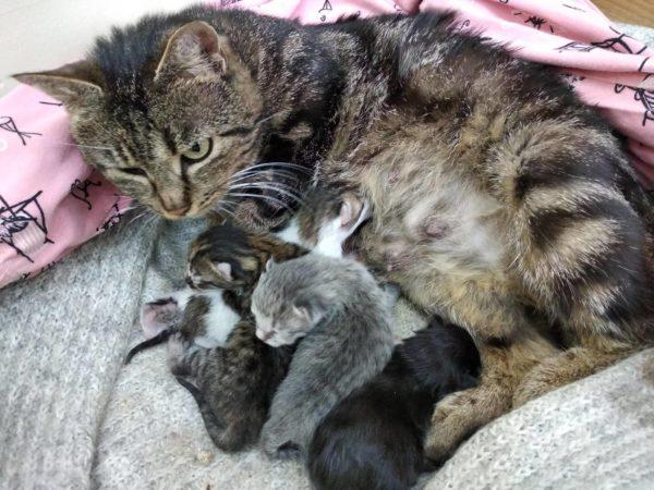 Кошка отказывается от котят