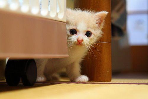 Котенок перестал ходить в туалет по большому 3