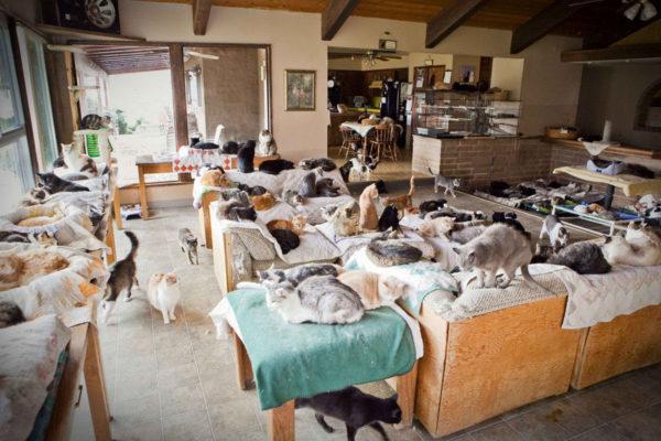 Приюты для кошек