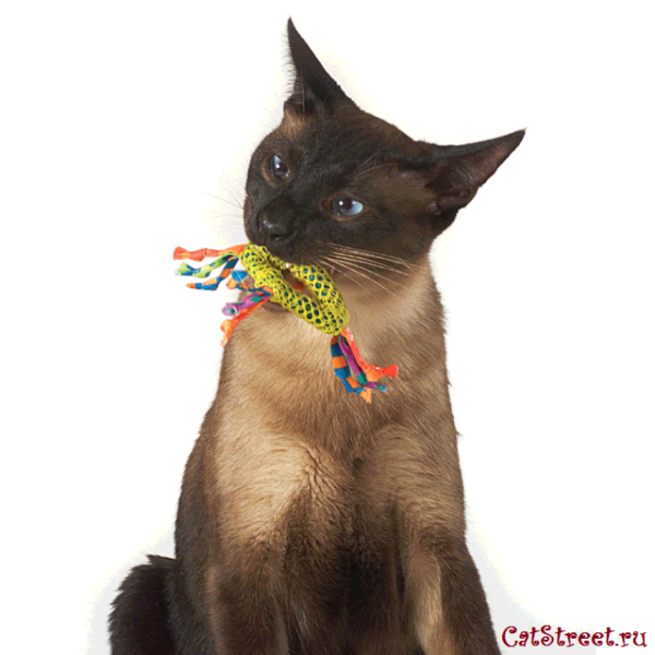 Смена зубов у котят 2