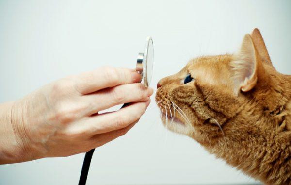 У кота понос что делать чем лечить 1