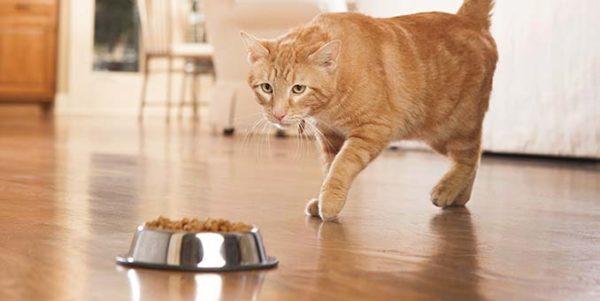 У кота понос что делать чем лечить 2