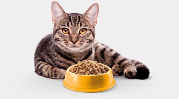 Выбираем корм для кошки. 7 основных правил