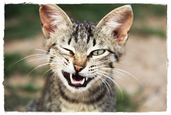 33 удивительных фактов про кошек