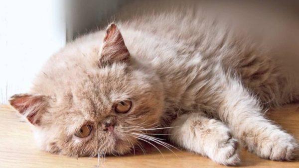 Болезни пожилых кошек