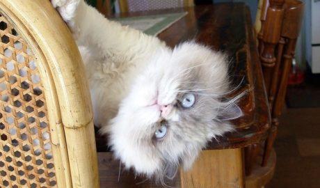 Дрессировка и обучение кошек