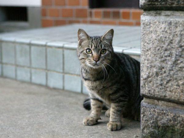 Если котенок потерялся