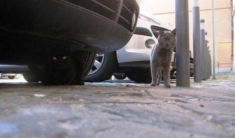 Если вашу кошку сбила машина