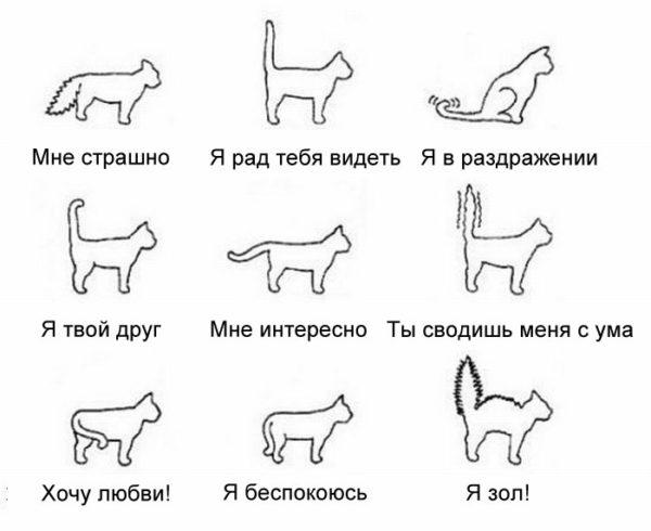 Как понять язык кошки