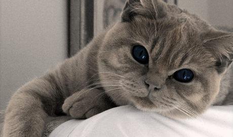 Кодировки окрасов кошек