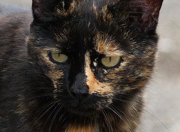 Окрасы кошек