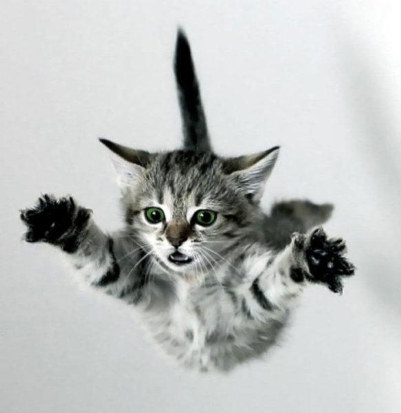 Падение кошек