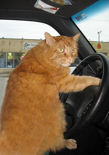 Перевозка кошек в поезде, самолете, машине