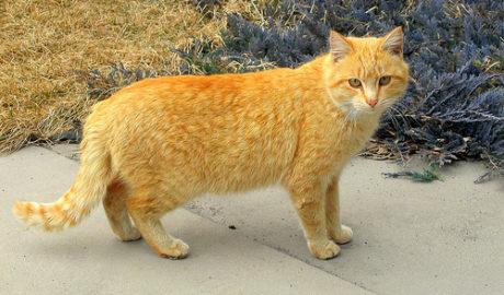 Показатели здоровья кошек