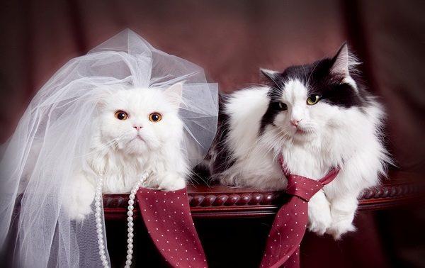 Половое созревание кошек