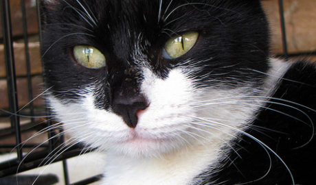 Прерывание беременности у кошек