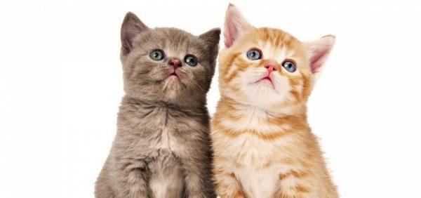 Развитие котят