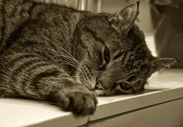 Симптомы болезней кошек