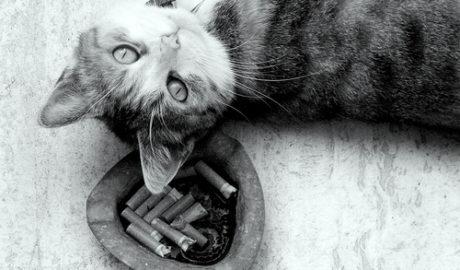 Табачный дым и кошки