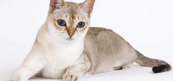 Уход за внешностью кошки и кота