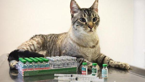 Вакцины для котят и кошек