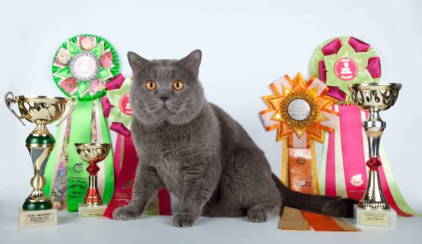 Выставка кошек по системе WCF