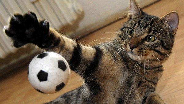 Законы про кошек